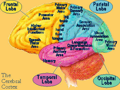 what is biological psychology Biological psychology, also known as behavioral neuroscience and psychobiology, is the study of physiological processes and how they affect human behavior according to this concept, behavior is inextricably related to somatic or physiological experiences that are created by the brain 's interpretation of sensory impingement.